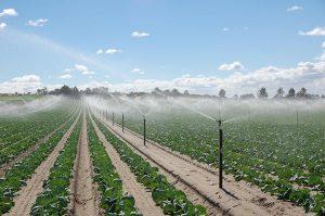 استفاده از آب شور در کشاورزی